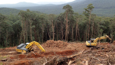 Land clearing is a major driver of animal extinctions.