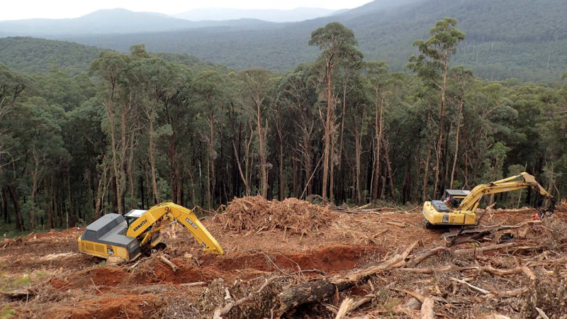 Queensland Landholders Warned Of Massive Fines Over Exempt Land Clearing