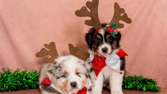 The leftovers you shouldn't give your pets this Christmas
