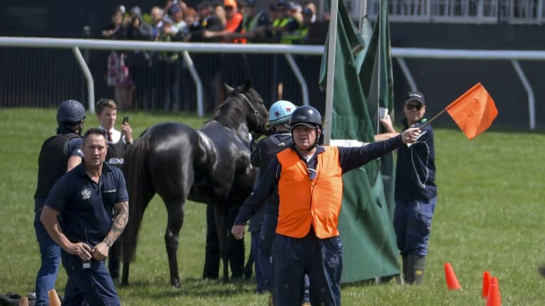 The Cliffsofmoher is attended to on the track after suffering an injury.