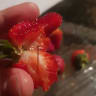 Six brands of strawberries across four states now affected by needle sabotage