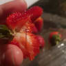 Copycat fears as strawberry sabotage spreads to a fifth state