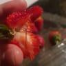 Third strawberry brand sabotaged, prompting nationwide recall
