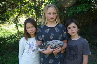Bon Madden, Millie Schulz and MontyMadden with a dead tawny frogmouth.
