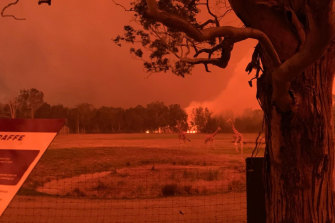 """""""It was black and red, like midnight, at 11 o'clock in the morning,"""" Mogo Wildlife Park director Chad Staples said."""