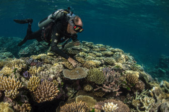 The 'godfather of coral' and Living Coral Biobank Project partner, Dr Charlie Veron, examines biodiversity on the reef.