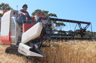 Jason Cotter on the wheat harvester at Tuerong Farm in Victoria.
