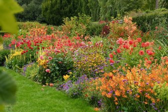 Dahlias pictured in Frogmore Gardens.