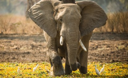 Zimbabwe has $428 million worth of ivory it wants to sell to the world