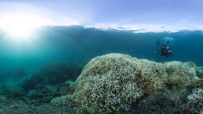 Barrier Reef doomed as up to 99% of coral at risk, report finds