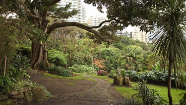 The 80 kilometre walk will come near Wendy Whiteley's not so secret garden in Lavender Bay.