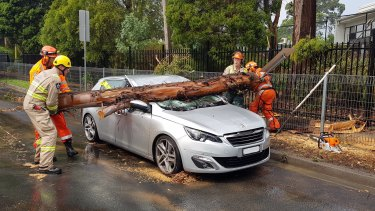A couple have a lucky escape after a large branch crushes their car in Bulleen.