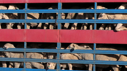 Summer ban on live exports a 'sham' after Federal Court ruling, MPs say