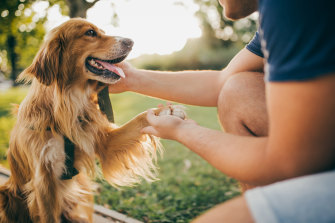 """""""Dogs are born with this innate ability to understand that we're communicating with them and we're trying to co-operate with them."""""""