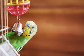 Social media was invented to serve the same purpose as the suckold budgie.