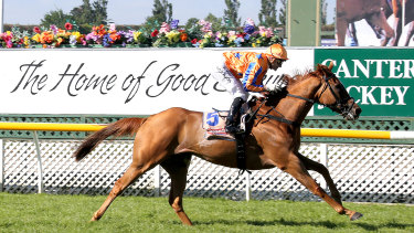 Te Akau Shark has finished worse than second just once and chases a maiden group 1 in Saturday's Epsom at Randwick.