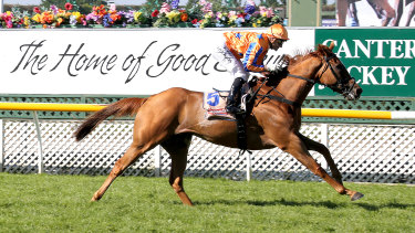 Cox Plate placegetter Te Akau Shark is set to be retired.