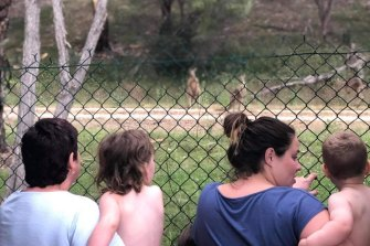 A family watches the kangaroos.
