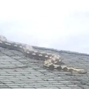 'It's huge!': 5.5m-long snake on US roof horrifies neighbours