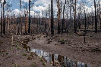 A bushfire-affected river in East Gippsland.