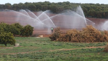 Desperate farmers are now paying eight times more than usual for water.