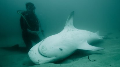 Court blows Queensland shark management plan out of the water