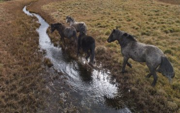 Brumbies are destroying Kosciuszko National Park and must be removed