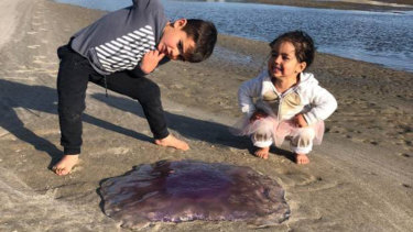 "Eve Dickinson's children spent ages looking at the jellyfish, she said, ""because of its beautiful colours and shape""."