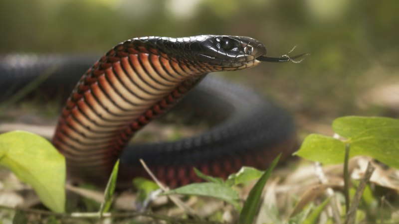 What To Do If You See A Snake And Where Is This Likely To Happen
