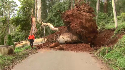 'Terrifying': Strong winds put Dandenong Ranges residents on edge