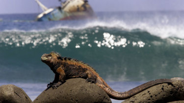 An iguana sunbathes over volcanic stones on the shores of San Cristobal Island in the Galapagos Archipelago.