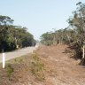 Conservation watchdog investigates: Is bushfire tree removal 'overzealous'?