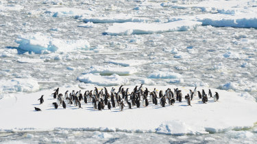 The Antarctica Experience.