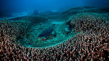 The Great Barrier Reef Foundation plans to raise donations to almost match the $443.4 million grant from the Turnbull government.