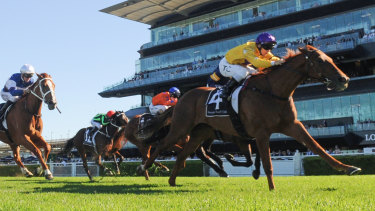 Leader of the pack: Wolfe finds the line nicely over 2000m at Randwick.