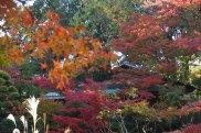 Nezu garden