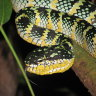 Snakes alive: How to test deadly venom without killing animals