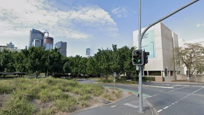 Reprieve for South Brisbane fig trees as council explores relocation