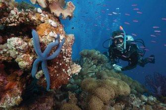 Marine biologist Gareth Phillips (pictured) says it made sense to take UNESCO ambassadors to the reef before the vote.