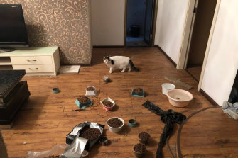 A cat in a Wuhan home after being saved by volunteers, who left food and water that can last a month.