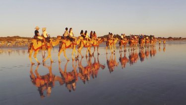 The incident happened during a Sundowner Camel Tours evening tour.