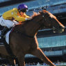 Race-by-race tips and preview for Randwick (Kensington) on Saturday