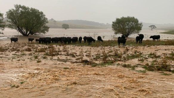 'Like a tsunami': Murrumbateman farmers devastated by recent rains