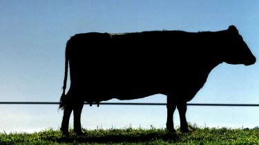 New Zealand dairy giant Fonterra has reiterated its fiscal 2019 guidance but unveiled up to $860 million of writedowns.