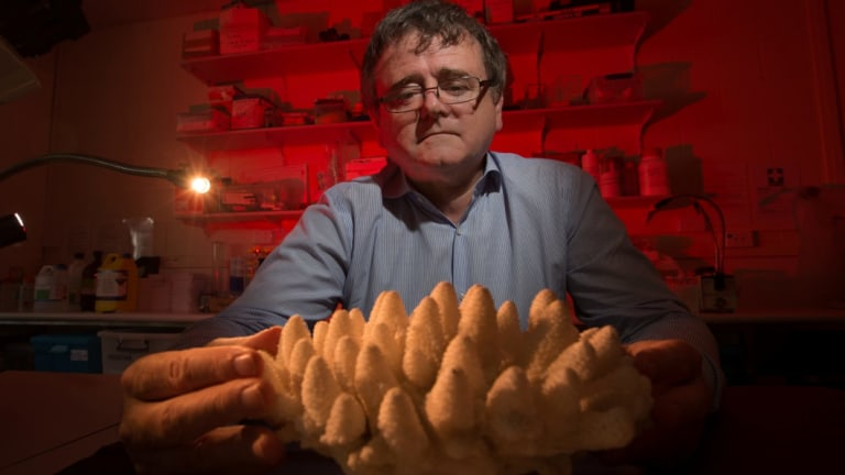Professor Terry Hughes, head of the ARC Centre of Excellence for Coral Science Studies, James Cook University, has often been critical of government policy.