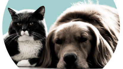 'Survival of the cutest': What are cats and dogs thinking?