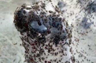 For entomologist Dr Ken Walker, beauty is definitely in the eye of the beholder.