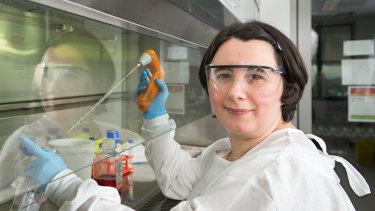 QUT'sDr Francesca Frentiu in QIMR Berghofer'sMosquito Control Laboratory.