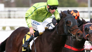 Self Sense wins during Bletchingly Stakes Day at Caulfield last year.