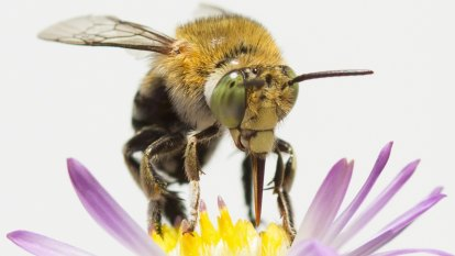 Gardeners, bee prepared: review your plantings in Pollination Week